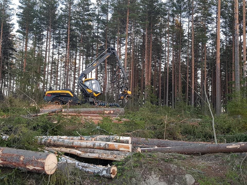 Tammikuun puunkorjuuta 2020